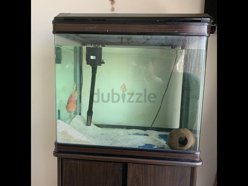 Aquarium for sale (no fish)  Only serious buyers message on WhatsApp